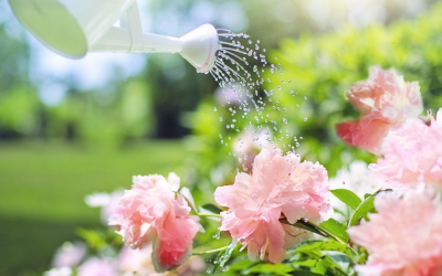 6 Spring Gardening Preparation Tips